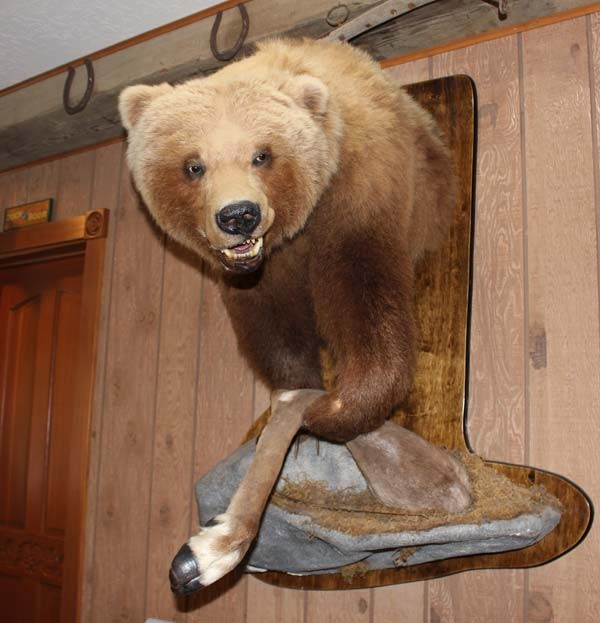 sidebar-bear