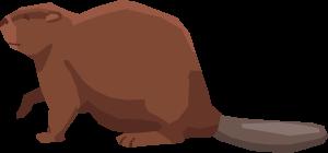 beaver-large-2